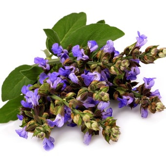 CLARY SAGE </br> essential oil  or floral water