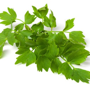 LOVAGE </br> essential oil