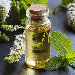 PEPPERMINT </br> essential oil  or floral water