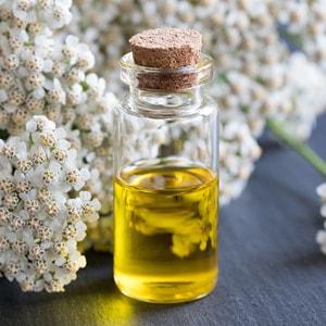 ACHILLEA MILLEFOLIUM </br> essential oil  or floral water