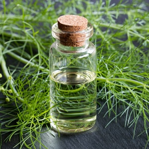 FENNEL - sweet / bitter</br> essential oil  or floral water