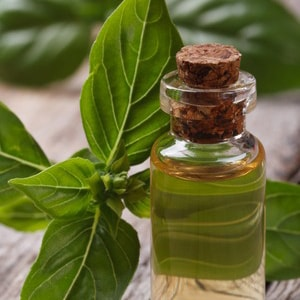 BASIL </br> essential oil